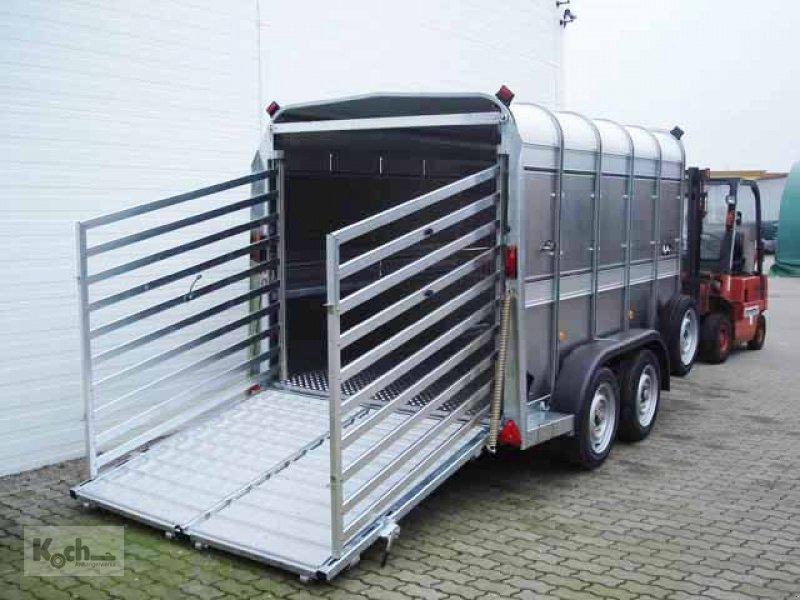 Anhänger des Typs Sonstige Viehanhänger TA510 178x311 Höhe:183 3,5t|Rampe/Tür|Ifor Williams (Vi0597Iw), Neumaschine in Winsen (Luhe) (Bild 1)