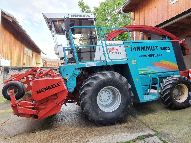 Feldhäcksler des Typs Mengele Mammut 6800, Gebrauchtmaschine in Cham (Bild 1)