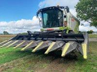 Olimac Dragot GT 8-reihig klappbar auch für Sonnenblumen kukoricacsőtörő adapter