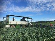 Hieble 854 HY egyéb zöldségtechnika