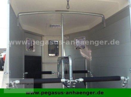 Viehanhänger des Typs Humbaur Notos 2-Pferdeanhänger ALU 2,4 to. 2021, Neumaschine in Gevelsberg (Bild 10)